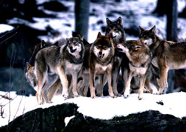 wolf.rudel