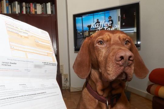 Hund-soll-Rundfunkgebuehren-zahlen-2-