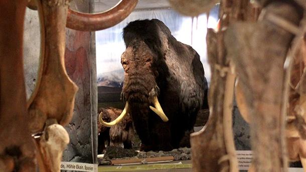 mittels-neuer-verfahren-sollen-schon-in-vier-jahren-wieder-mammuts-durch-sibirien-ziehen-