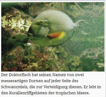 doktorfisch