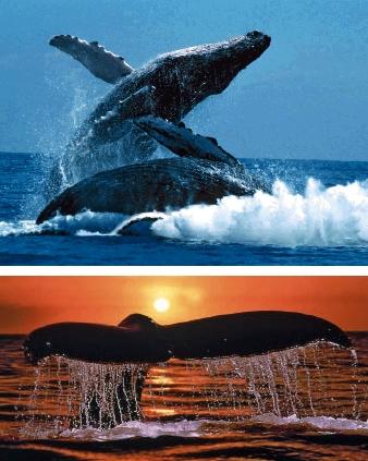 Musik-der-Meeresbewohner2