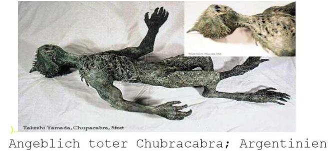 angeblich toter churbracra