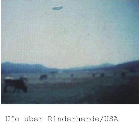ufo bei rinderherde