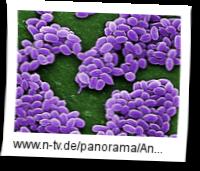USA-Panne-bei-Anthrax-Erreger-Versand-weitet-sich-aus_1158706
