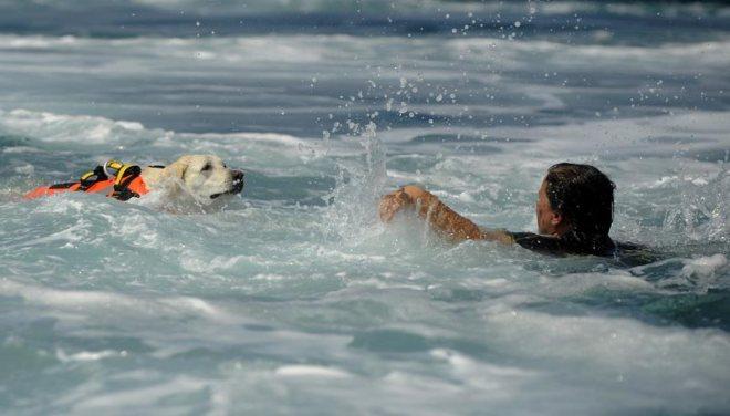 Rettungshund-Wasser-Bild-augenblicke.t-online.de-Foto-Arno-Balzarini-AFP