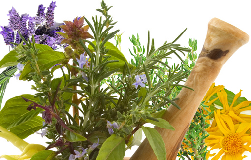 Heilpflanzen_510x325