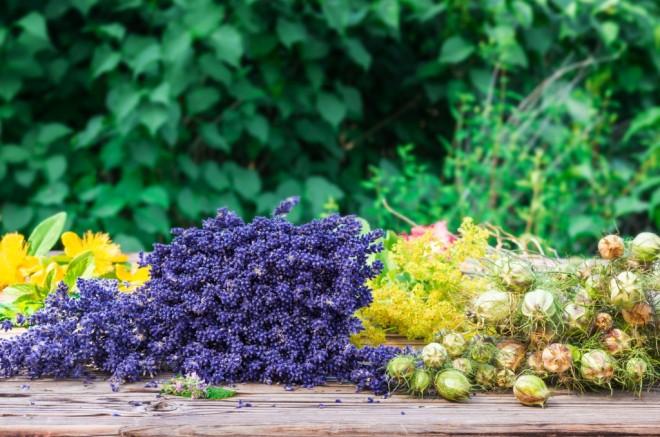 lavendel-johanniskraut-1024x679