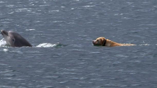 delphin hund