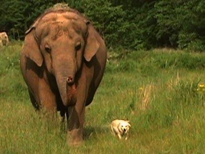 elefant hund