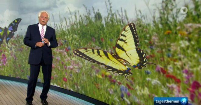 NATO-Verbündete-enthaupten-in-Syrien-einen-10-Jährigen-–-ARD-berichtet-über-Schmetterlinge-696x364