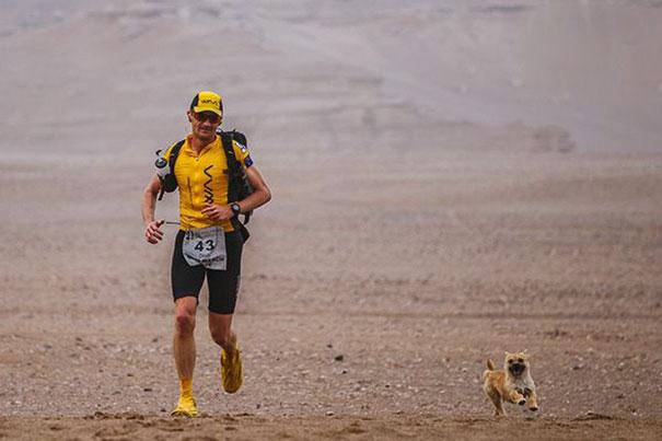 stray-dog-joins-race-gobi-dion-leonard-china-3
