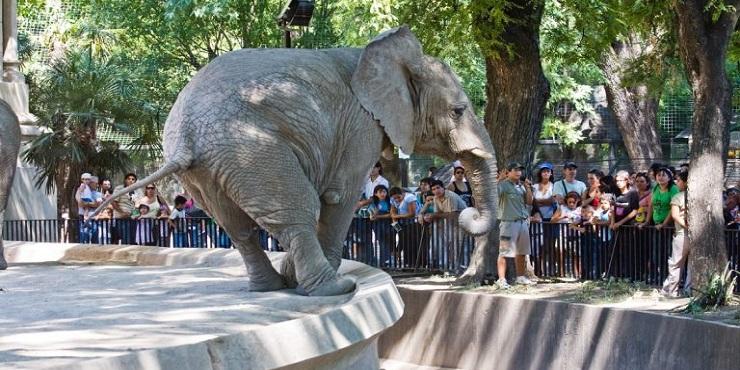 """Erfolg! Buenos Aires schließt seinen Zoo, weil """"Gefangenschaft erniedrigend ist"""""""
