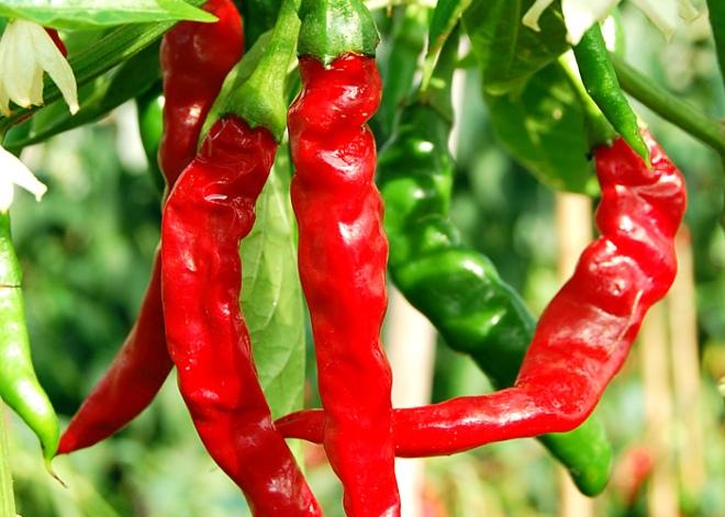 chili-cayenne