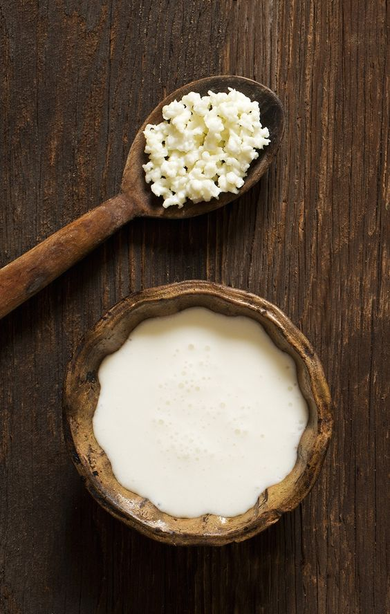 Milk kefir grains on a wooden spoon overhead shoot